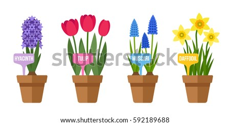 vector set of potted spring