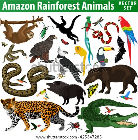 vector set of rainforest jungle
