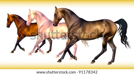 Vector set of realistic different horse's colors
