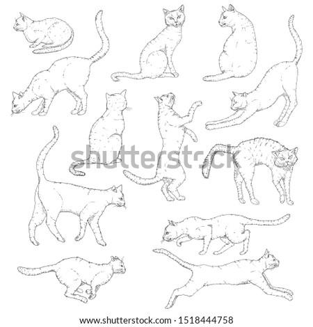 Vector Set of Sketch Cats illustration. Hand Drawn Penciling Feline Poses