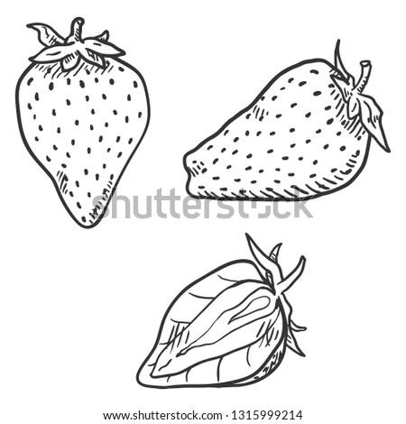 Vector Set of Sketch Strawberries