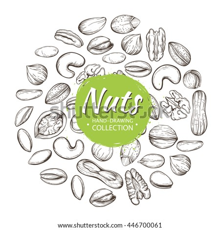 Vector set of sketches of various nuts isolated on a white background. The pattern with space for text.Line silhouettes of cashew, hazelnut, walnut, pistachio, pecan.