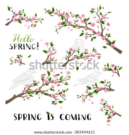 vector set of spring blanches