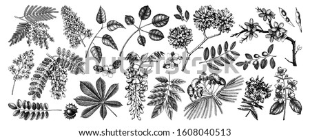 Vector set of spring trees in flowers illustrations. Hand drawn blooming plant. Spring design elements. Vector flower, leaf, branch, tree sketches collection on white background. Botanical drawings.