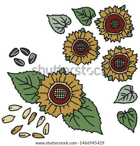 Vector set of sunflowers with leaves and seeds in van Gogh pallette. Simple doodle sunflower illustration hand drawn. Great for graphic elements, social media, packaging, autumn rustical invitations.