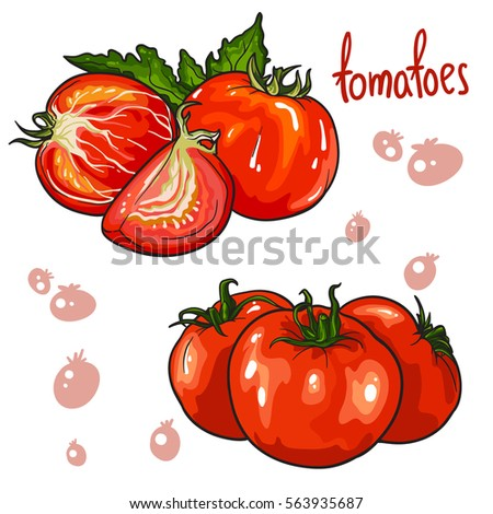Shutterstock Vector set of tomatoes vegetable. Isolated on white background.