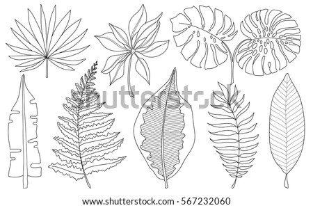 vector set of tropical palm