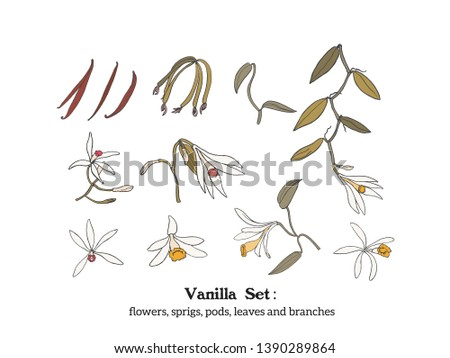 Vector  set of vanilla plant parts - flowers, leaves. pods, beans, branches and buds. Hand drawn illustration.