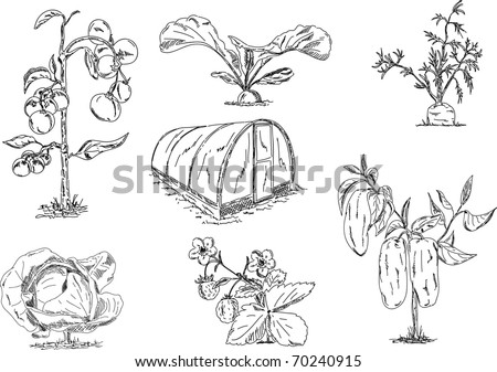 vector - set of vegetables with greenhouse