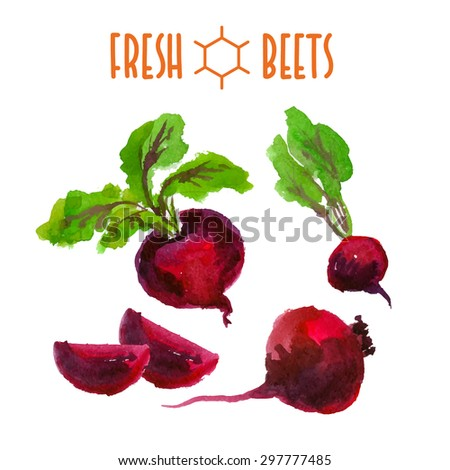 Vector set of watercolor beets elements on white background. Cute illustration is good for magazine or book, poster and card design, menu cover.