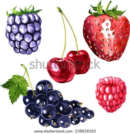 vector set of watercolor drawing berries, hand drawn illustration