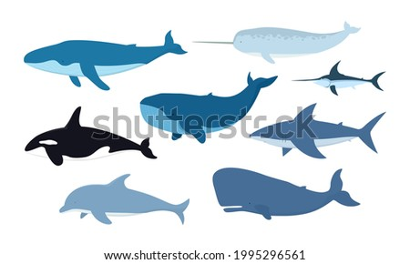 Vector set of whales and marine animals. Undersea world. shark, dolphin, narwhal, blue whale, humpback whale, sperm whale, swordfish, killer whale isolated on white background.