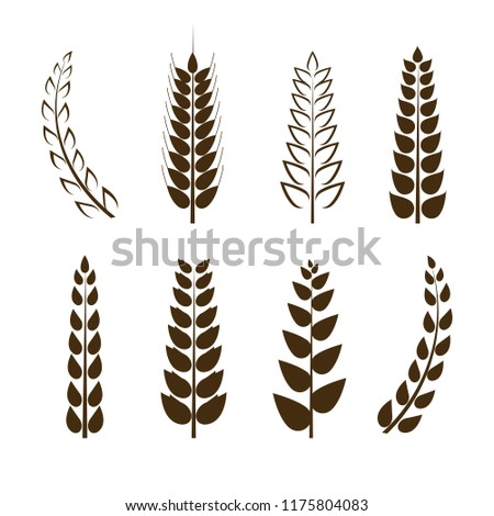 Vector Set of Wheat Icons, Grain Symbols, Different Shapes Collection, Black Design Elements Isolated on White Background.