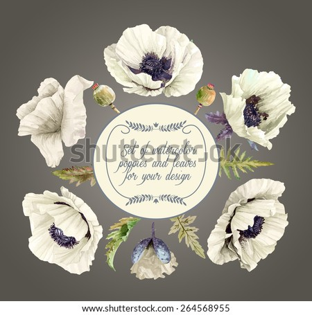 vector set of white poppies