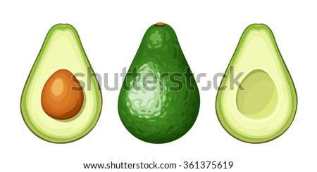 Vector set of whole and sliced avocado fruit isolated on a white background.