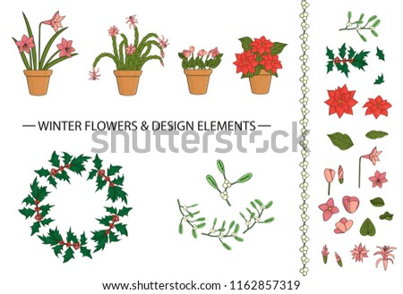 Vector set of winter flowers and design elements in pots, bouquets, wreath. Vector illustration of poinsettia, hippeastrum, schlumbergera, holly, mistletoe, cyclamen isolated on white background