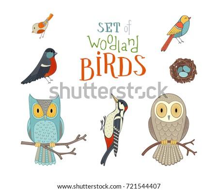 Free Woodpecker Vector