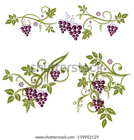 Vector set, vine leaves with grapes