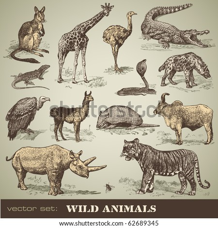 vector set  wild animals