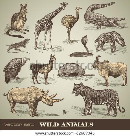 vector set: wild animals - variety of retro animal illustrations