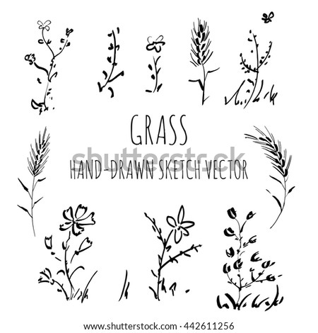 Vector set wild grass, drawing by hand #442611256
