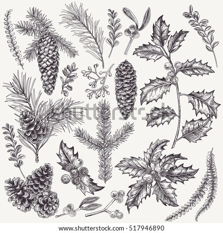 Vector set with Christmas plants. Botanical illustration. Branch of holly, spruce, pine, boxwood, cones. Design elements isolated on white background. Engraving style.