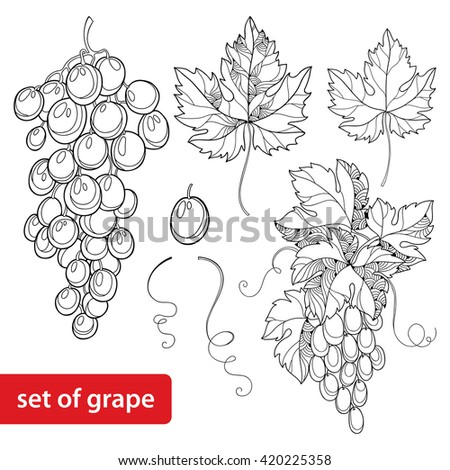 vector set with ornate bunch of