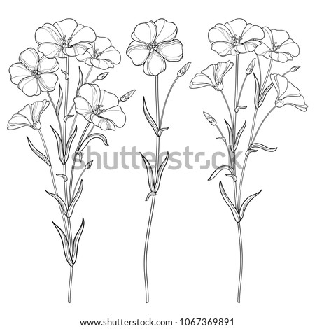 vector set with outline flax