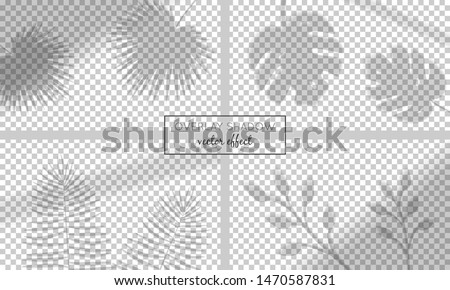 Vector set with shadow overlays  on transparent background. Organic and window frame shadows for natural light effects. Photo-realistic illustration with palm and monstera leaves