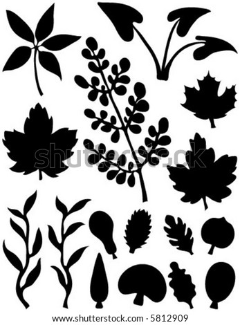 Size:147x150 - 4k: Maple Leaf Tattoo