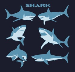 Vector shark comic style character wild fish set. Scary sharks animals, smiling jaws and swimming shark. Underwater marine monster, big sea shark creatures character.