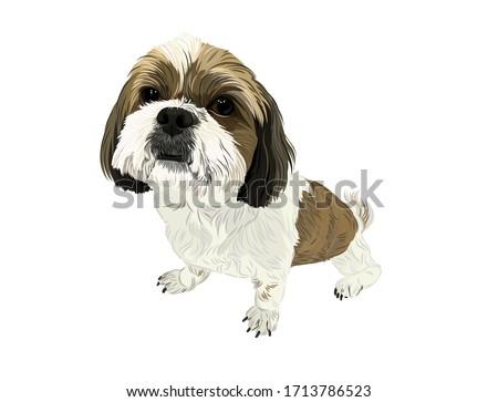 Vector shi tzu dog cute puppy