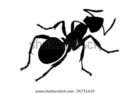 vector silhouette ant on white