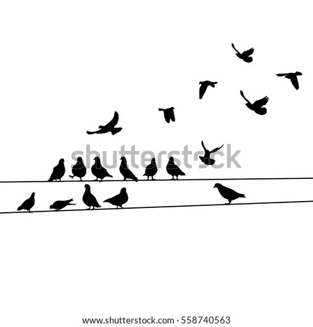 vector silhouette birds
