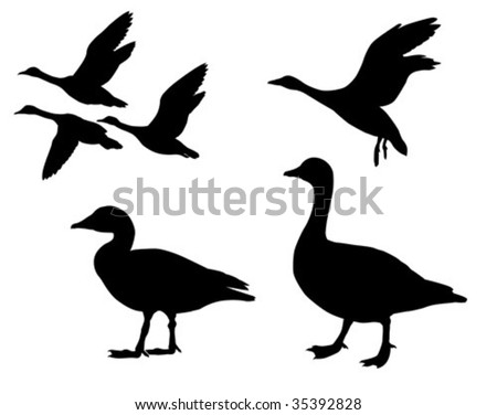 vector silhouette  geese on