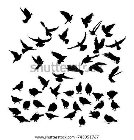 vector silhouette of a pigeons