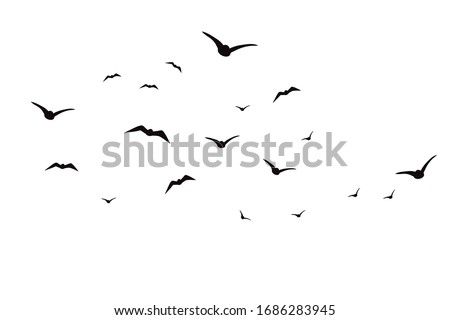 Vector silhouette of birds on white background. Symbol of animal and sky. Foto stock ©