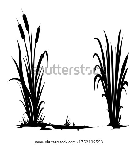 Vector silhouette of cattail isolated on white background Stockfoto ©