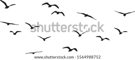 vector silhouette of flying