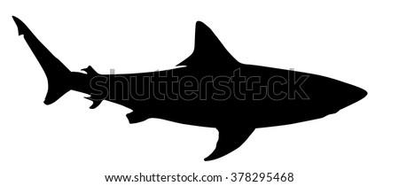 vector silhouette of shark