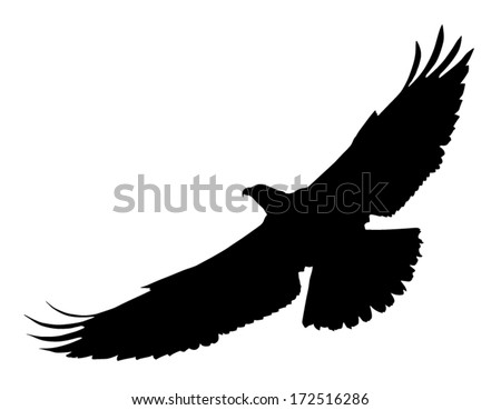 Vector silhouette of the Bird  Eagle Wings Silhouette