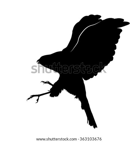 vector silhouette of the hawk