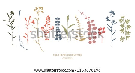 Vector silhouettes collection. Set of field herbs, flowers.