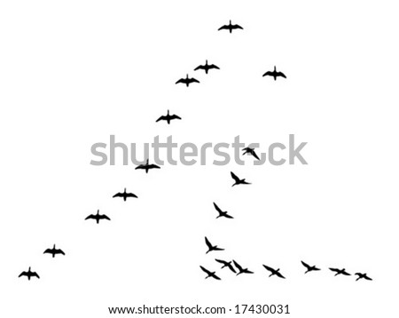 vector silhouettes flock geese isolated on white background