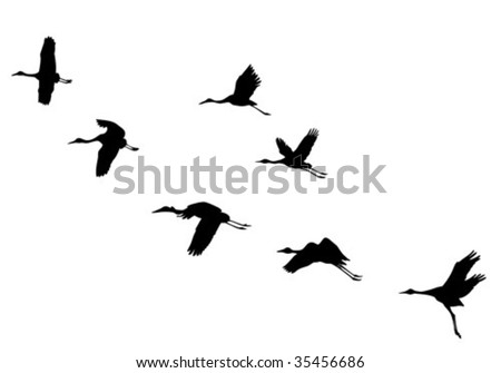 vector  silhouettes flying cranes