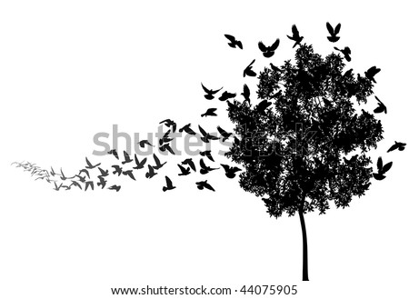 vector silhouettes of a pigeon