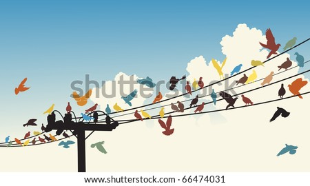 Vector silhouettes of colorful birds roosting on telegraph wires