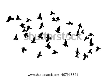 Vector silhouettes of flying birds, isolated black outline