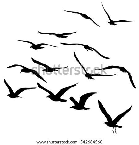 Vector silhouettes of flying seagulls, set of isolated black outlines of soaring birds