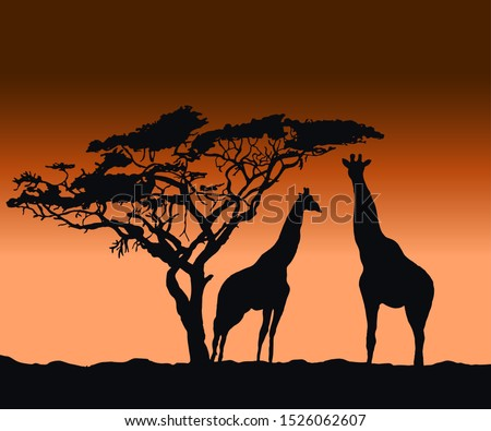 vector silhouettes of giraffes